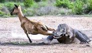 Hayvanlar Dünyasından En Vahşi Kareler