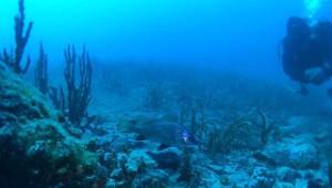 Dikili'de Batırılan Sahil Güvenlik Botuna İlk Dalış Yapıldı