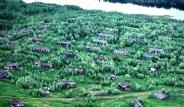 Sibirya'daki Ölüm Kampı Turistlere Açılıyor