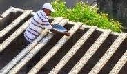 Hindistanlı Adam Her Gün 4 Bin Papağan Besliyor