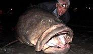 Yakaladıkları Balıklarla Şoke Ettiler