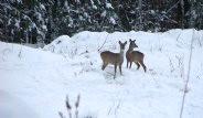 Çernobil Hayvanlar İçin Cennete Dönüştü