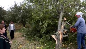 Çivril'de Çiftçiler Elma Ağaçlarını Kesti