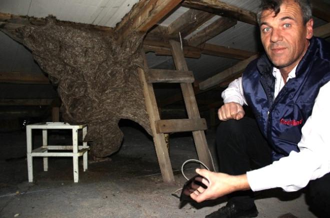 Çanakkale'de Katil Eşek Arıları Alarmı