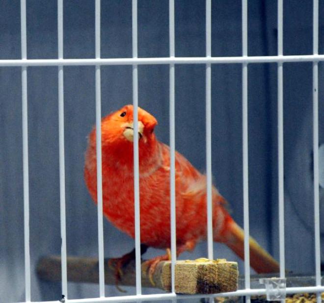Cumhuriyet Kupası'nda 3952 Kuş Yarışıyor
