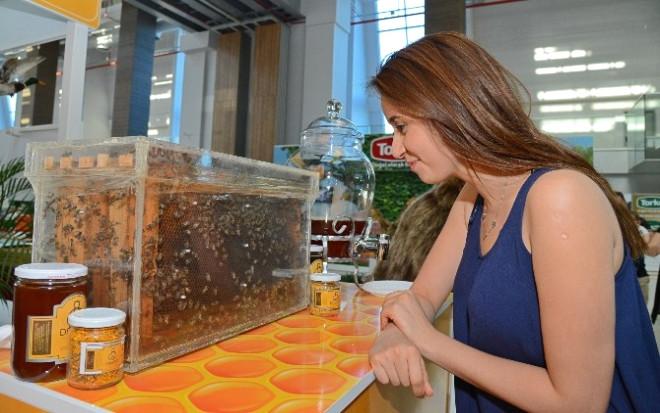 Mülayim Arılar, Expo 2016 Antalya'da