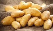 Sevilen Besin Patates Hakkında Bilmediğimiz 20 İlginç Bilgi