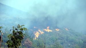 Güncelleme - Tokat'ta Orman Yangını