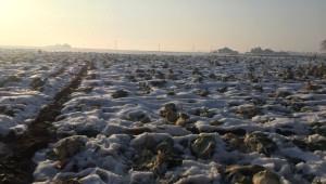 Patnos'ta Kar Yağışının Erken Başlaması Ahana ve Şeker Pancarı Ekicilerini Zor Durumda Bıraktı
