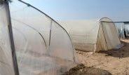 İsrail Tarım Çiftliği Sayesinde Çölü Adeta Vahaya Dönüştürdü