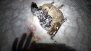 Soğuk Hava Sokak Hayvanlarının Ölümüne Neden Oldu