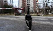 Felaketten Sonra Hayvanlar İçin Cennete Dönüşen Çernobil'den 36 Kare