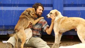 Üniversiteyi Bıraktı, 50 Köpeğe Bakıyor