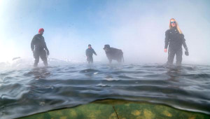 Buz Tutmuş Gölde Mandaların Beslenmesini Sualtından Görüntülediler
