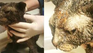 19 Yaşındaki Cani Genç Kediye Benzin Döküp Ateşe Verdi