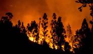 Şili'deki Orman Yangınları Söndürülemiyor