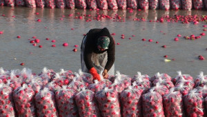 Mevsimlik İşçilerin Hayatta Kalma Mücadelesi