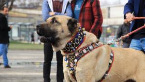 Türk Eylemcilere Köpekle Müdahale Eden Hollanda'ya Kangallı Tepki