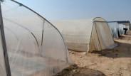 Kurdukları Çiftlik, Çölü Adeta Vahaya Dönüştürdü
