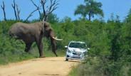 Öfkeli Fil, İçinde Turistlerin Olduğu Arabaya Takla Attırdı