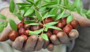 Bahçesinde Yetiştirdiği Hünnapla Lokum Yaptı, Köşeyi Döndü