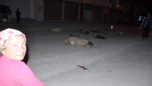 Kadirli'de Otomobil Sürüye Daldı, 25 Küçükbaş Hayvan Telef Oldu