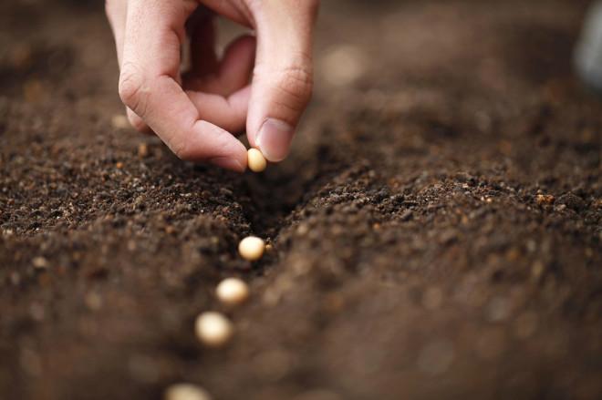 Tohumculuk Sektörü 2023 Hedefini Yukarı Yönlü Revize Etti