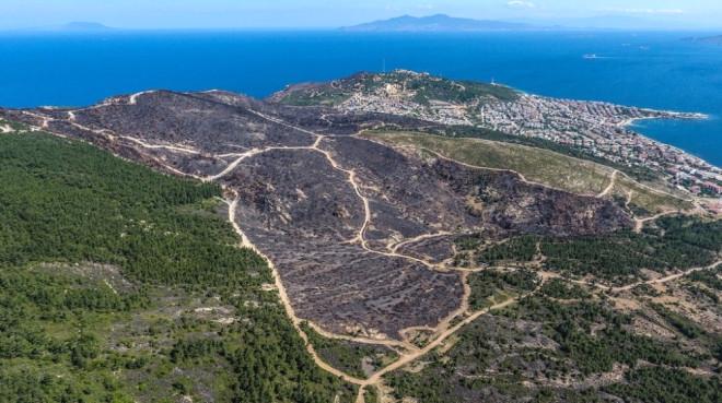 Yanan Orman Yeşile Büründürülecek