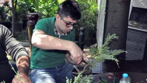 Bonsai Sanatı ile Ağaçlara Şekil Verdiler
