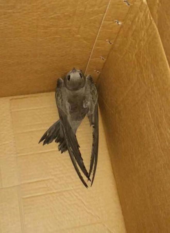 Polis Evine Konan Ebabil Kuşu Doğaya Salıverildi