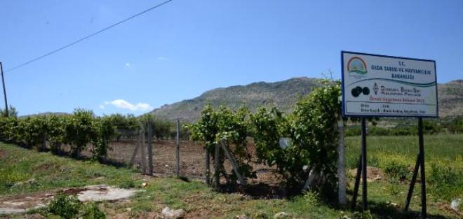 Güneydoğu'da Üreticiye 'Sıfır Maliyetli' Meyve Bahçeleri