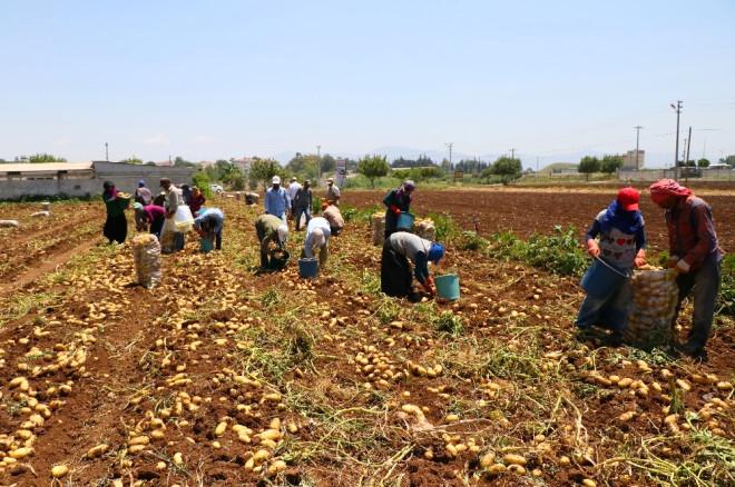 Tarım İşçilerinin Sıcakta Ekmek Mücadelesi