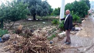 Dolu ve Sağnak Yağmur, Tarım Arazilerini ve Fidanlıkları Vurdu