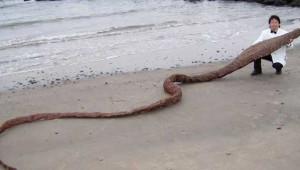 Denizden Çıkan Bu Canlılar Görenleri Şoke Etti