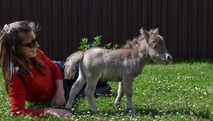 Dünyanın En Küçük Tayı Rusya'da Doğdu