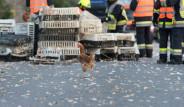 Kamyon Kaza Yapınca Binlerce Tavuk Yola Fırladı