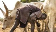 Güney Sudan'daki Mundari Kabilesi Sığır İdrarıyla Saçlarını Yıkıyor!