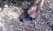 Avustralyalı Adam Toprağın Altında Devasa Yengeç Avladı
