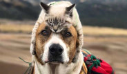 Gezgin Kedi ve Köpeğin Kıskandıran Dostluğu