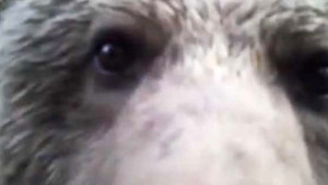Bu Kez Fotokapan Ayıya Yakalandı