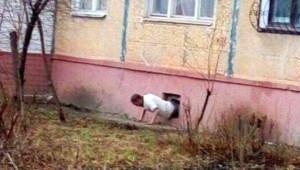 Rusya'nın Çok Garip Bir Yer Olduğunu Kanıtlayan 56 Anlaması Güç Fotoğraf