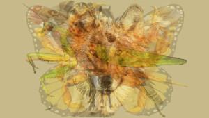 Fotoğrafta Gördüğünüz İlk Hayvan Kişiliğinizi Yansıtıyor