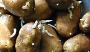 Tüketildiğinde Zehirleme İhtimali Yüksek Olan 10 Gıda