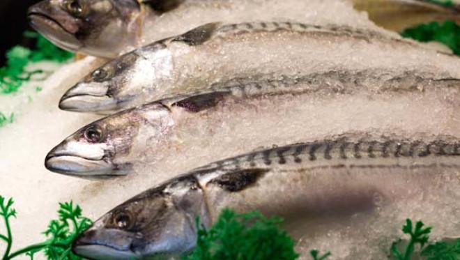 Bağışıklığı Güçlendiriyor, Alzheimer'ı Önlüyor! İşte Balığın 10 Önemli Faydası