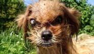 Sokakta Ölmek Üzereyken Bulunan Korkunç Köpek 8 Ayda Sağlığına Kavuştu