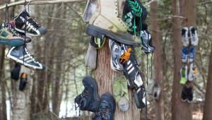 Kanada'da Keşfedilen Gizemli Ayakkabı Ormanı
