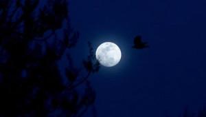 Kartpostallık Görüntüler Oluşturan 'Süper Ay'dan Kareler