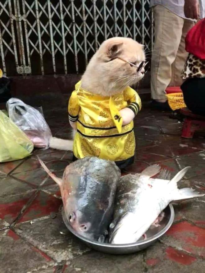 Balıkçı Kedi Sosyal Medyayı Salladı