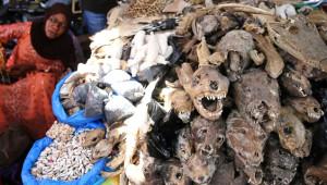 Afrika'daki Büyücü Pazarı: Hayvanları Kurutup Zehirleriyle Satıyorlar