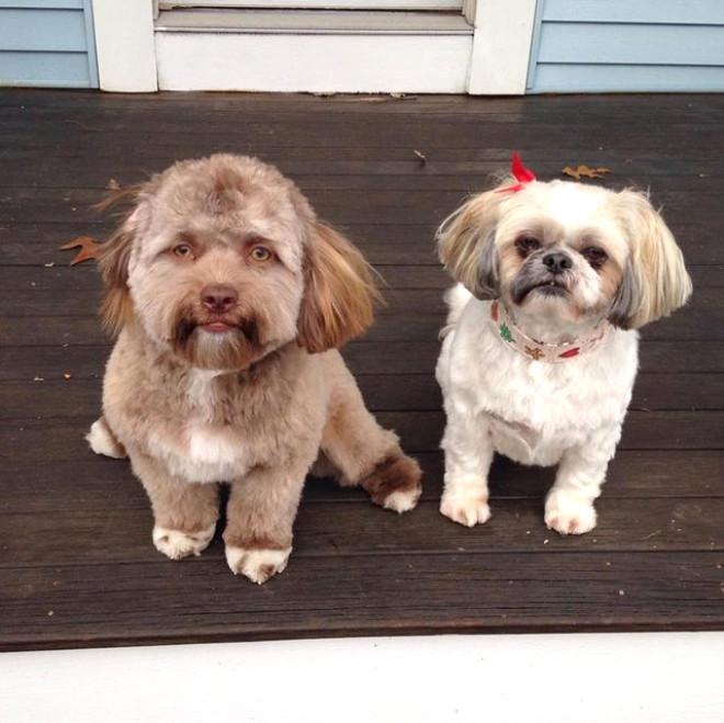 Dünya Bu Köpeği Konuşuyor! İşte İnsan Yüzlü Köpek